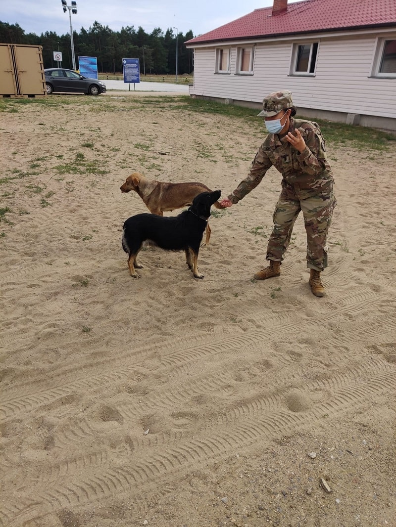 Army Sergeant in uniform playing outside in a dirt area with her two dogsdogs