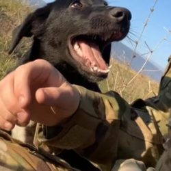 happy rescue dog smiling at soldier