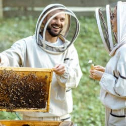 Two young beekepers in protective uniform working on a small apiary farm, getting honeycomb from the wooden beehive